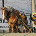 写真: ノエルブラン レース_1(18/03/03・7R)