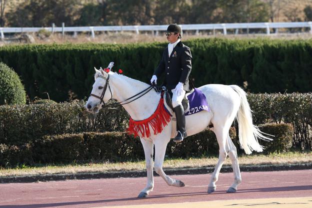 笠松競馬場 誘導馬・エクスペルテ_5(17/12/30)