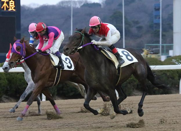 テイケイネクサス レース(18/01/13・第5回 サイネリア賞)