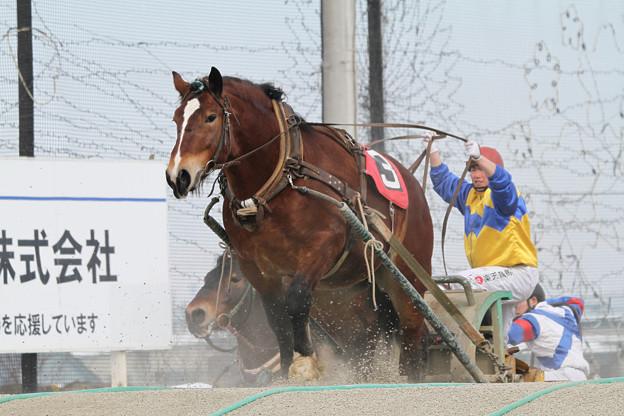 オレワチャンス レース_2(18/03/04・1R)