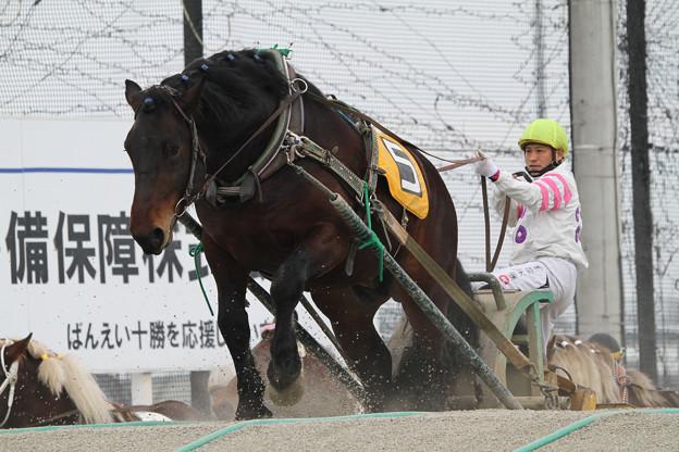 カネサコトブキ レース(18/03/04・2R)