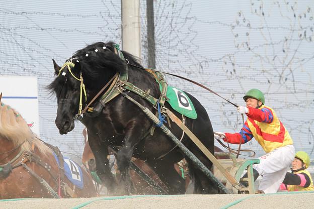 セトノブツリュウ レース(18/03/04・4R)