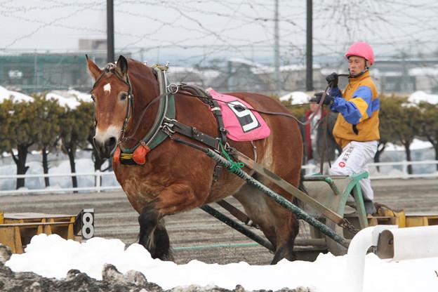 サカノチサト レース(18/03/04・7R)