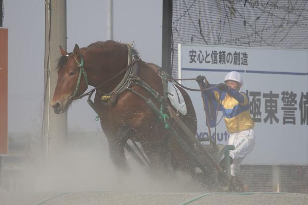 写真: サカノスピード レース(18/04/29・2R)