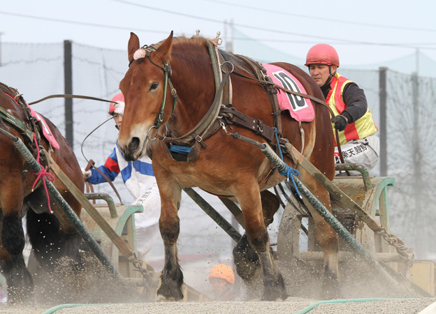 カネササクラ レース(18/03/04・3R)
