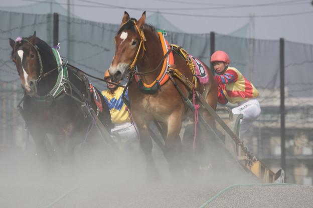 ヒメオリュウ レース(18/04/29・1R)