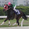 Photos: サムライドライブ レース(18/05/02・第57回 駿蹄賞)