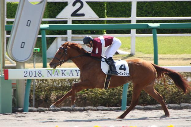 写真: マローネメタリコ レース(18/03/31・1R)