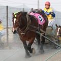写真: オレワチャンス レース(18/04/29・5R)