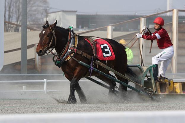 写真: ウィナーグラス レース(18/04/29・2R)