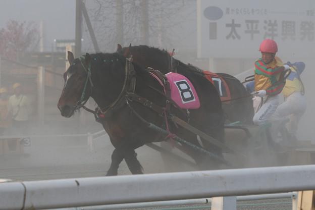ムサシコマ レース(18/04/29・6R)