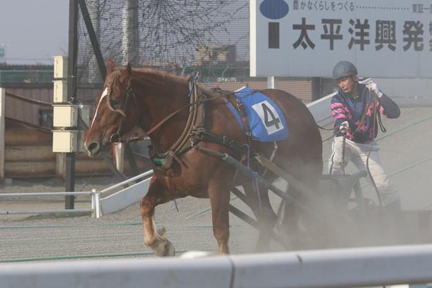 ホクトリュウセイ レース(18/04/29・3R)