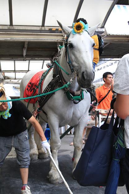 誘導馬 ミルキー_1(17/08/15・笠松競馬場)