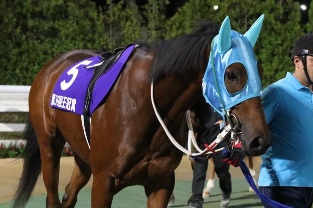 Photos: クロスウィンド パドック_1(18/07/26・北海道新聞社杯 第39回 王冠賞)