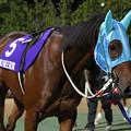 クロスウィンド パドック_1(18/07/26・北海道新聞社杯 第39回 王冠賞)
