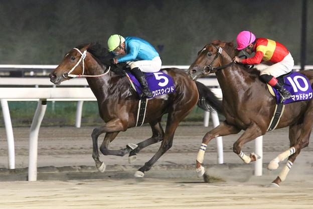 クロスウィンド レース(18/07/26・北海道新聞社杯 第39回 王冠賞)