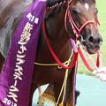 タイセイドリーム(18/08/25・第20回 新潟ジャンプステークス)