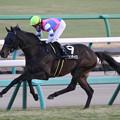 バイオンディップス レース(17/12/23・グレイトフルステークス)
