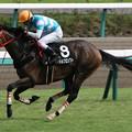 マイネルプロンプト レース(18/09/22・清秋ジャンプステークス)