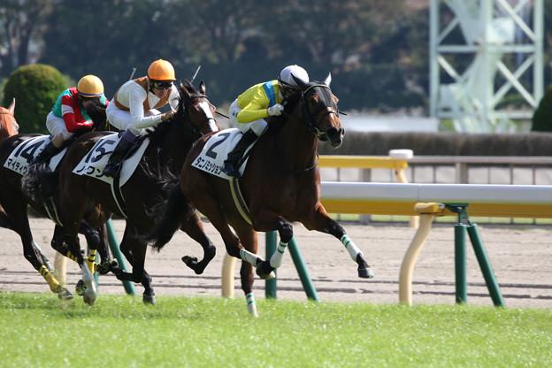 タニノミッション レース_1(18/10/20・新馬戦)