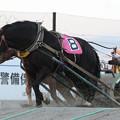 写真: ライデンメルテイ レース(18/06/16・8R)