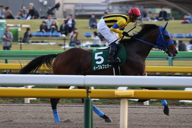 イーグルフェザー 返し馬(18/11/10・第23回 東京中日スポーツ杯武蔵野ステークス)