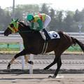 写真: エムオータイショウ レース(18/07/26・新馬戦)