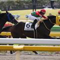 コスモロビンソン レース(18/11/11・2R)