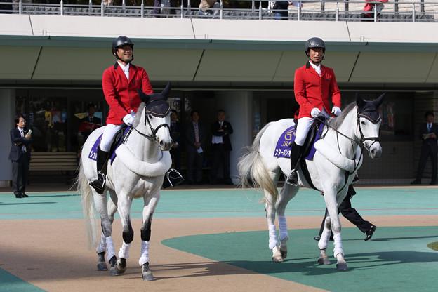 東京競馬場 誘導馬_3(18/11/11)
