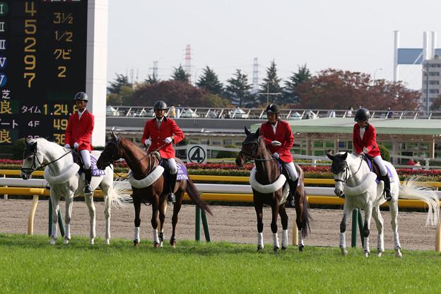 東京競馬場 誘導馬_6(18/11/11)