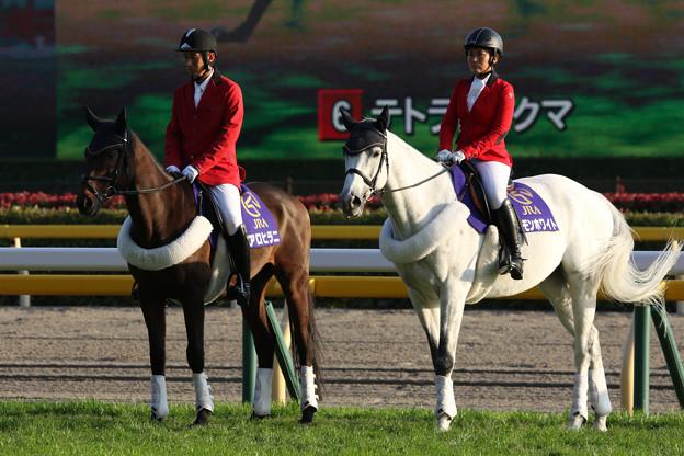 東京競馬場 誘導馬_8(18/11/11)