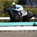 マグナレガーロ レース(18/03/10・新馬戦)