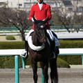阪神競馬場 誘導馬・タマモナイスプレイ_6(18/03/10)