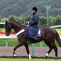 福島競馬場 誘導馬_3(18/07/07)