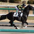 ニーマルサンデー 返し馬(18/01/07・8R)