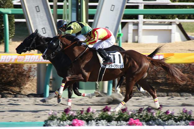 中山競馬場(18/01/07・8R)