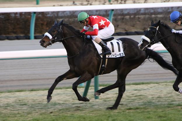 レッドローゼス レース(18/01/07・12R)