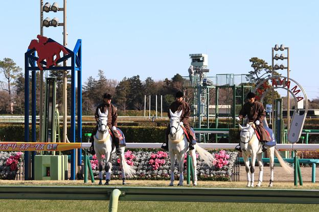 中山競馬場 誘導馬_6(18/01/07)