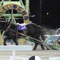 センショウブルー レース(17/11/26・第30回 南北海道産駒特別)