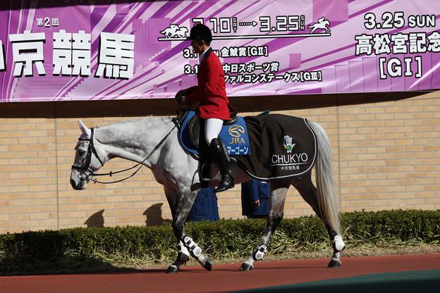 中京競馬場 誘導馬_1(18/03/11)
