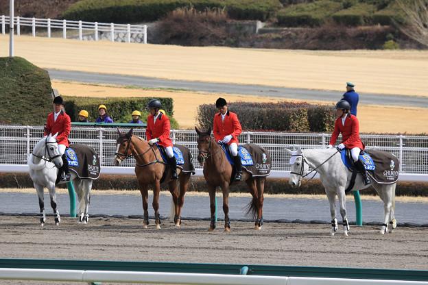 中京競馬場 誘導馬_4(18/03/11)