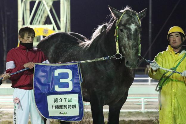 第37回 十勝産駒特別 口取り(18/12/02)