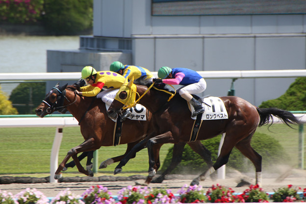 タテヤマ レース(18/05/05・8R)