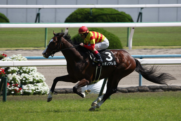 ハギノアレス レース(18/05/05・鴨川特別)