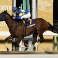 モジアナフレイバー レース(18/12/05・第10回 勝島王冠)