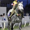 Photos: カネゾウ パドック(18/06/16・層雲峡特別)