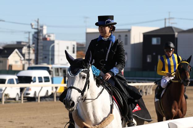 浦和競馬場 誘導馬_3(18/11/23)