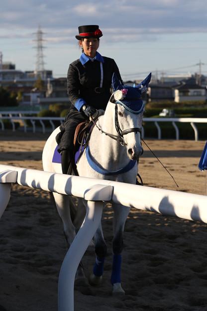 浦和記念 誘導馬_2(18/11/23)