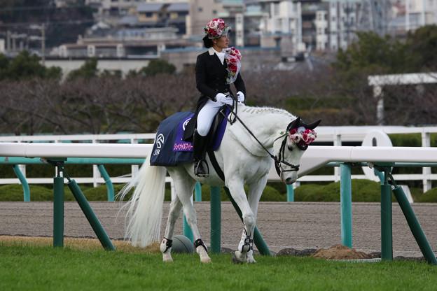 第70回 阪神ジュベナイルフィリーズ 誘導馬_3(18/12/09)