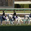 第35回 ホープフルステークス 誘導馬_1(18/12/28)